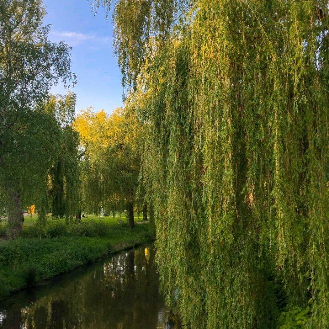 4x Eindhoven's best parks