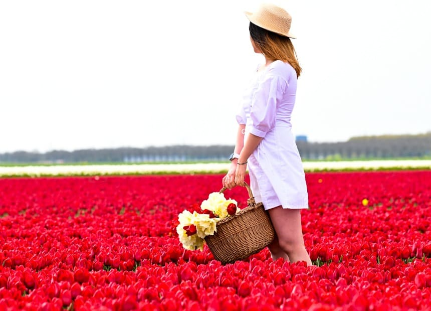 girl standing in tulip fields