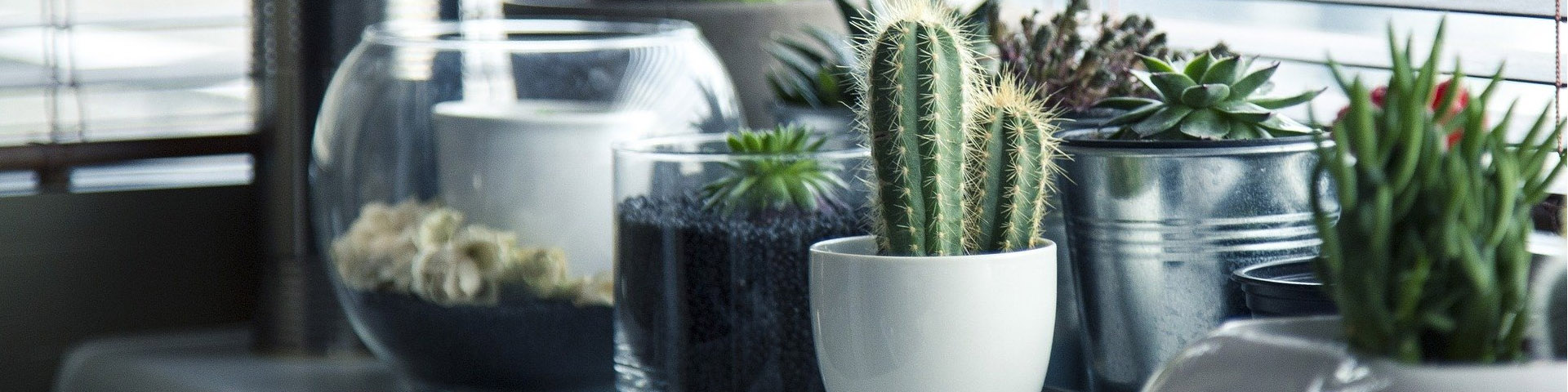 different house plants in bowls