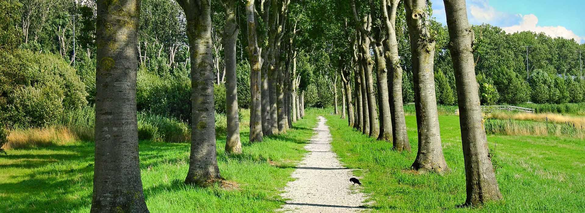 nature in Waalre