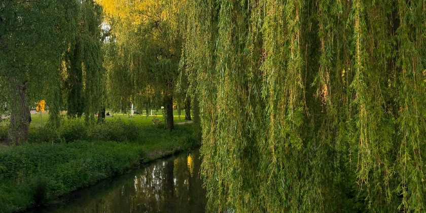 park with weeping willows near city center in Eindhoven
