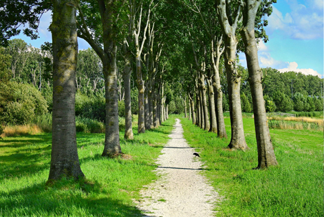 walking path through forest in waalre