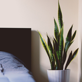 plant next to bed